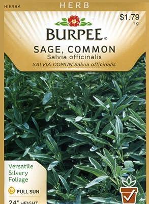 Burpee 66167 Herb Sage, Common Seed Packet