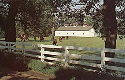 Calumet Farm, Horses, White Fences, Etc., Fayette County Kentucky Original Vintage Postcard