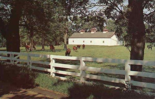 Calumet Farm, Horses, White Fences, Etc., Fayette County Kentucky Original Vintage Postcard