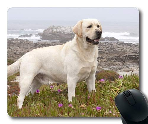 Gaming Mouse pad,Poodle Dog Labrador Dog hd,Precision Seaming,Durable Mouse pad (Best Vitamins For Labradors)