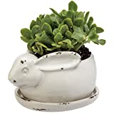 Cheap Prinz Potting Shed Bunny Planter with Tray