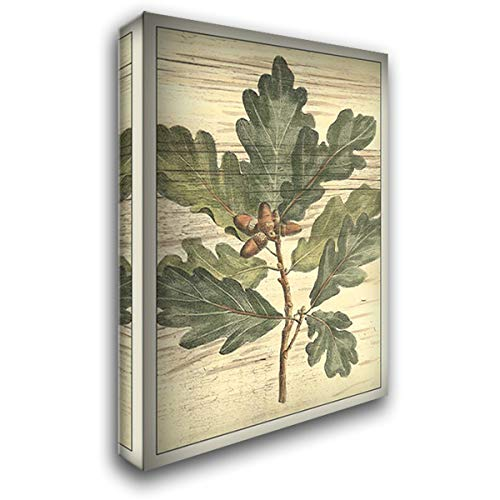 (Weathered Oak Leaves I 28x38 Gallery Wrapped Stretched Canvas Art by DeShayes, Gerard Paul)