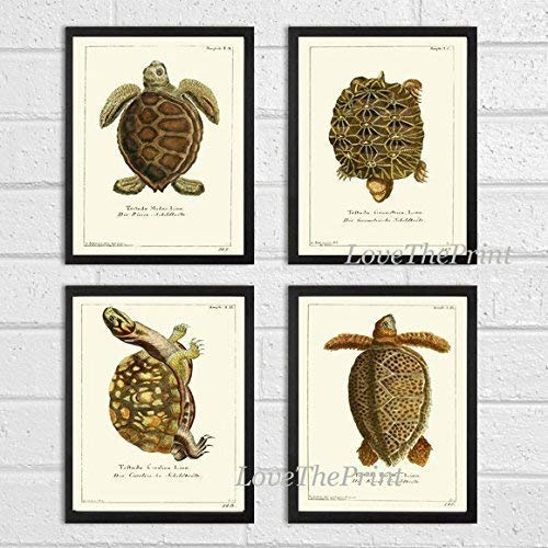 (Turtle Art Print SET of 4 Beautiful Antique Turtles Tortoise Reptile Desert Nature Natural Science Illustration Room Wall Home Interior Decor to Frame Unframed)