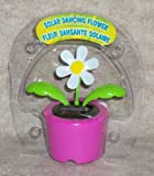 Solar Dancing ''DAISY'' Flower (Bubble Package) - PINK Pot