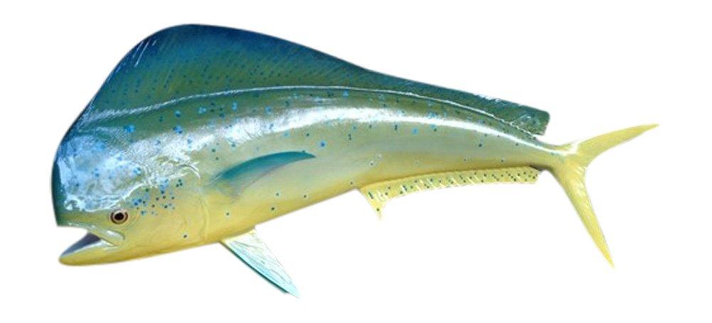 48'' Bull Dolphin Two Sided Wall Mount Fish Replica Trophy, Fishing Wall & Coastal Decor