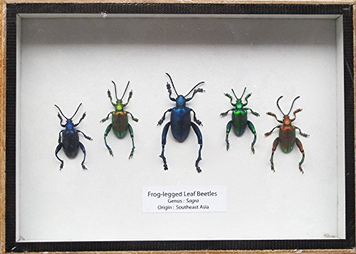 insect pictures - 8