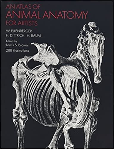 Amazon.com: An Atlas of Animal Anatomy for Artists (Dover Anatomy ...