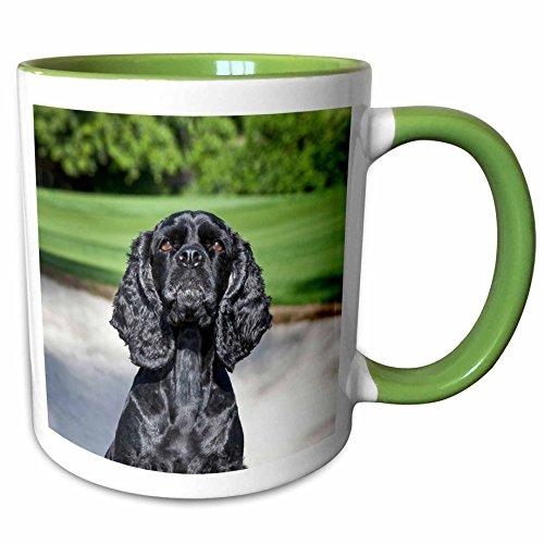 3dRose Danita Delimont - Dogs - Cocker Spaniel dog on a golf course - US05 ZMU0288 - Zandria Muench Beraldo - 15oz Two-Tone Green Mug (mug_142958_12)