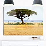 Designart MT12900-48-30 Acadia Tree & Cheetah in Africa Extra Large African Landscape Glossy Metal Wall Art, 48 x 30, Green/Brown