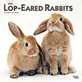 Lop Eared Rabbits 2020 12 x 12 Inch Monthly Square Wall Calendar, Domestic Small Pets Animals
