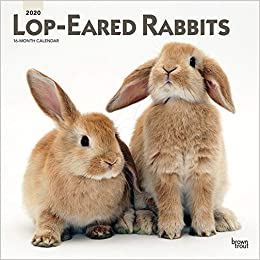 Lop Eared Rabbits 2020 12 x 12 Inch Monthly Square Wall