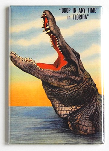 Florida Alligator Fridge Magnet (2 x 3 inches) ()