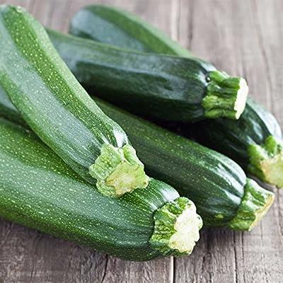 Cashflow Hybrid Zucchini Summer Squash Garden Seeds - Non-GMO - Vegetable Gardening Seed