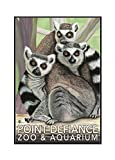 Ring Tailed Lemurs - Point Defiance Zoo and Aquarium (16x24 Framed Gallery Wrapped Stretched Canvas) offers