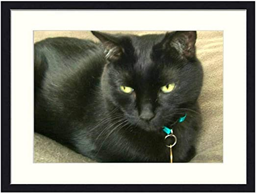 Amazon Com Asommet Beautiful Black Cat Solid Wood Framed Wall Art Print Picture Home Decor 20x14 Inches Posters Prints