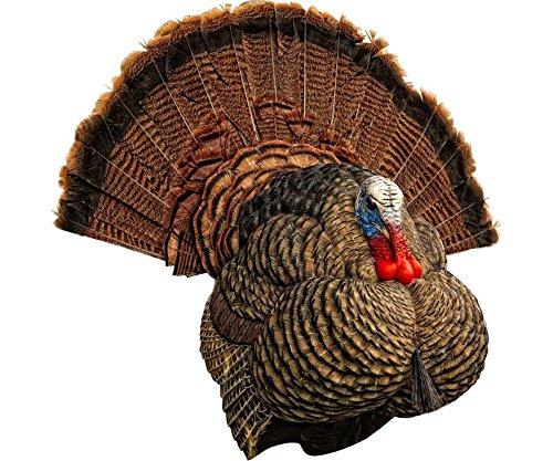 Decoy Tom - Avian-X Strutter Turkey Decoy