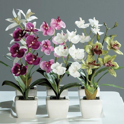 Orchideen, Liefermenge = 6