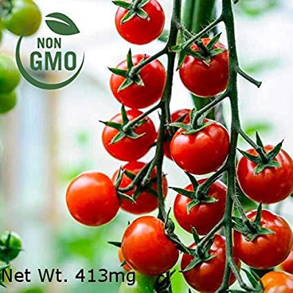 Tomato 25 Seeds Gardener/'s Delight Cherry open pollinated variety
