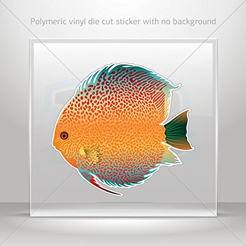 - Decal Fish Discus Freshwater aquarium Tablet Laptops Weatherproof Spor (5 X 4.64 Inches)