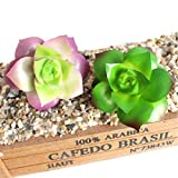 ZJCilected 2Pcs Assorted Succulents Real Touch Artificial Cactus Plants Unpotted Home Garden Office Decor-Echeveria Purpusorum