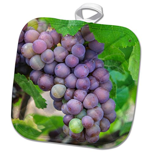 grapes on a vine - 8