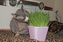 Priscilla\'s Kitty Cat Grass Kit - Grow Your Own Grass