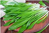 Ramson Herb seeds/ Chinese garlic from Ukraine / 90 seeds