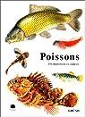 Poissons par Pivnicka