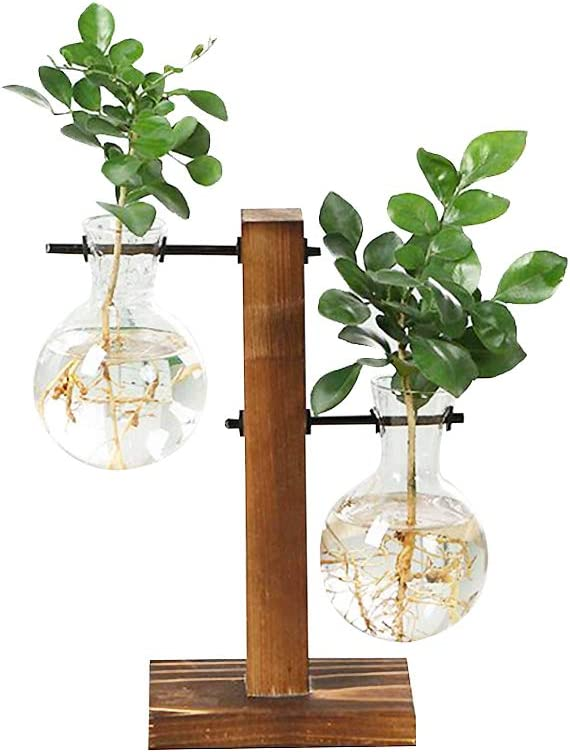 Urbanic Jungle Twinse Air Planter Terrarium with Retro Wooden Stand, 2 Bulb Glass Vase Hydroponic Plant, Glass Vase for Home Garden Office Decoration, Propagation Station.