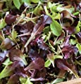 David's Garden Seeds Lettuce Wildfire Mix D2850A (Multi Color) 1000 Open Pollinated Seeds