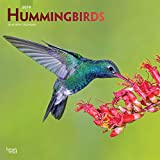 Hummingbirds 2019 12 x 12 Inch Monthly Square Wall Calendar with Foil Stamped Cover, Animals Wildlife Birds (Multilingual Edition)