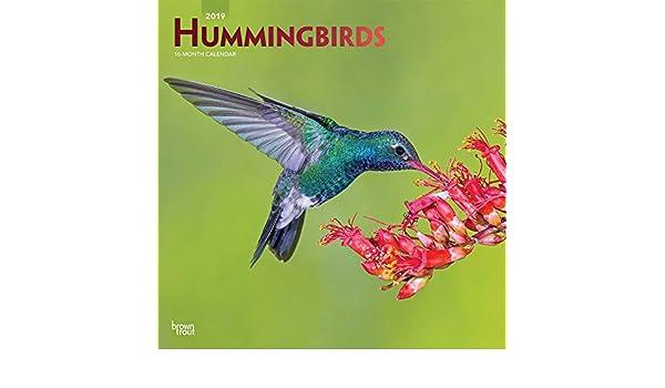 Hummingbirds - Kolibris 2019 - 18-Monatskalender: Original ...