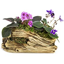 Natural Elements Log Planter (Trunk) – Realistic Woodland-Themed with Intricate Weathered bark Detail + Fiber Soil + Moss Mulch. Grow Small Succulents, Cactus, African Violets. Striking in Any Décor.