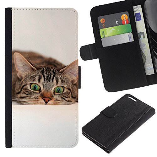 EuroCase - Apple Iphone 6 PLUS 5.5 - cat American British shorthair wirehair - Cuero PU Delgado caso cubierta Shell Armor Funda Case Cover