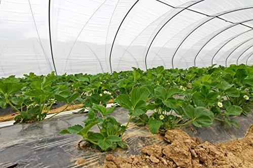 UV5 Gew/ächshausfolie 4m x 10m Folientunnel Treibhausfolie Gartenfolie Folie