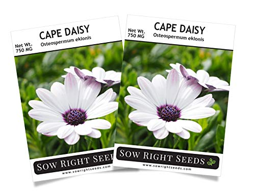Sow Right Seeds Cape Daisy Seeds - Full Instructions for Planting, Beautiful to Plant in Your Flower Garden; Non-GMO Heirloom Seeds; Wonderful Gardening Gifts (2) ()