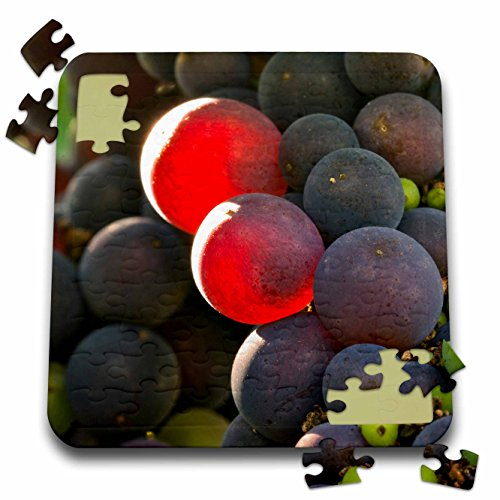 Danita Delimont - Vineyards - Pinot Noir in Bayless Vineyard, Lafayette, Oregon - US38 JMI0907 - Janis Miglavs - 10x10 Inch Puzzle (pzl_93808_2)
