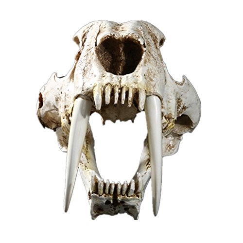 Cambrian_CN Simulation Model of Exhibition with High Precision Resin Interior Decoration Items Sabertooth Skull Animal Skull Specimens