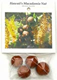 Hawaiian Macadamia Nut Tree Plant Seeds ~ Grow Hawaii