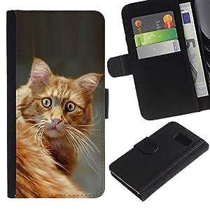 All Phone Most Case / Oferta Especial Cáscara Funda de cuero Monedero Cubierta de proteccion Caso / Wallet Case for Sony Xperia Z3 Compact // Surprised House Cat Orange American Shorthair