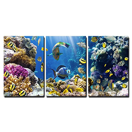 wall26 - 3 Piece Canvas Wall Art - Photo of a Tropical Fish on a Coral Reef - Modern Home Decor Stretched and Framed Ready to Hang - 16