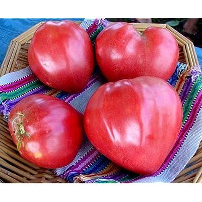"(VTOHO)~""Oxheart""~Tomato~Seeds!!!!~My Favorite Heirloom!! : Tomato Plants : Garden & Outdoor"