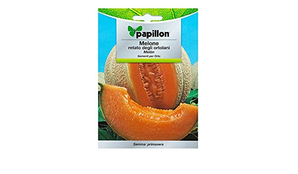 Semillas Melon Cantalupo (3 Gramos): Amazon.es: Bricolaje y ...