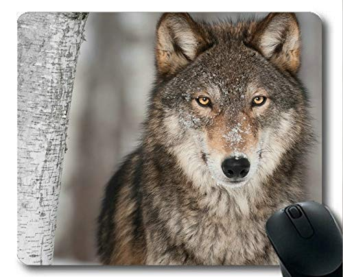 Flying Pig Men Mouse pad,Stare Wildlife Wolf Rubber Gaming Mouse pad (Multicolor)
