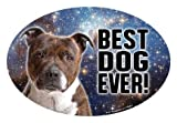Staffordshire Bull Terrier BRINDLE Gift - (Best Dog Ever!) 4 x 6 flexible oval magnet. Waterproof and UV resistent. by Fridge Magnets
