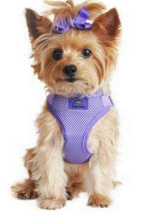 Doggie Design Wrap and Snap Choke Free Dog Harness - Paisley Purple (L) ()