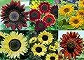 David's Garden Seeds Collection Set Sunflower KI0335 (Multi) 9 Varieties 575 Seeds (Non-GMO, Organic, Open Pollinated)