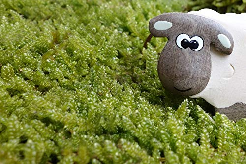 - Photography Poster - Sheep, Moss, Meadow, Eyes, Wood, 24