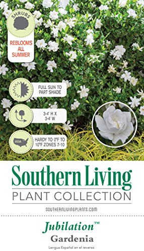 Southern Living Plant Collection 2096Q 2.5 Qt - Jubilation Gardenia Blooming Shrub, Quart, White, Green by Southern Living Plant Collection (Image #2)