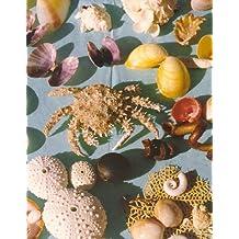 A book of shells